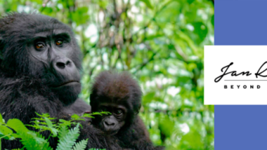 In the footsteps of Mountain Gorillas –  with Beyond Adventure African Highlands!